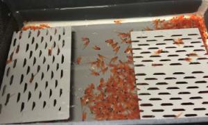 cubeta clasificación de salmonidos